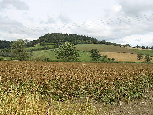 Potato field, Evenjobb