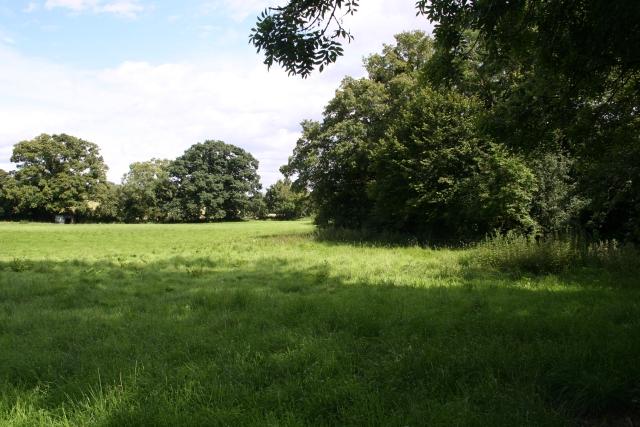 Stream-Side Meadow, Castlemorton