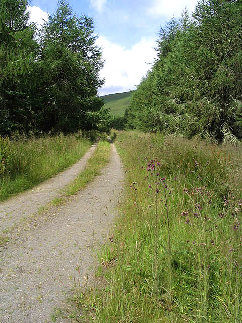 The track to Stennishope