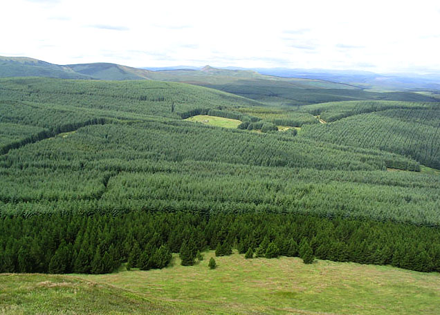 Forestry west of the Maiden Paps