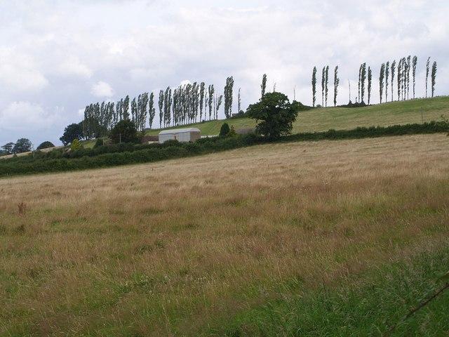 Mill Lane Fruit Farm