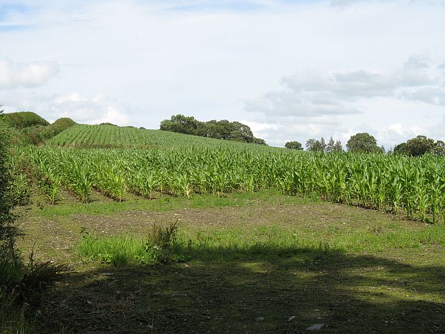 Maize, Kinnerton