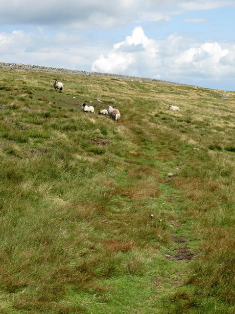 Path across rough pasture near Halleywell
