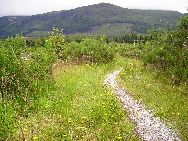 Path in Leanachan Forest