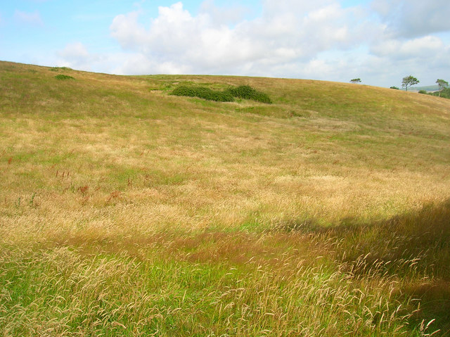 Downland near Upper Hyde
