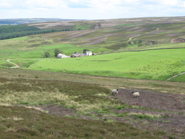 Moorland above Quickcleugh Burn (2)