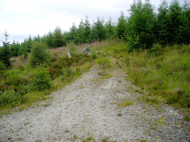 Track to Nowhere in Leanachan Forest
