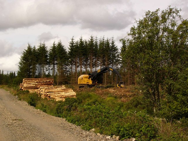 Forestry operations near Low Airies
