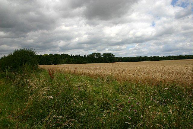 Trundley Wood