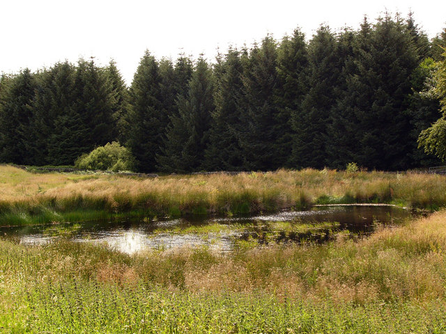 Forest pond near Low Airies