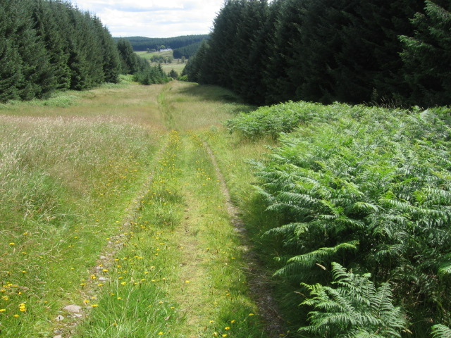 Southern Upland Way near Rivox