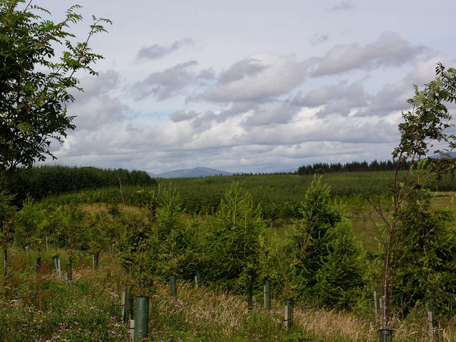 New forestry plantation near Low Airies