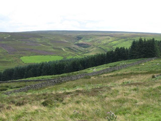 Moorland and plantation above Heatheryburn Farm (2)