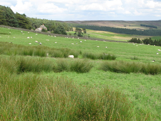 Rough pastures west of Riddlehamhope