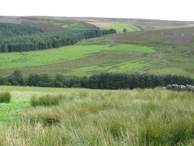 Rough pastures, moorland and plantations near Heatheryburn Farm