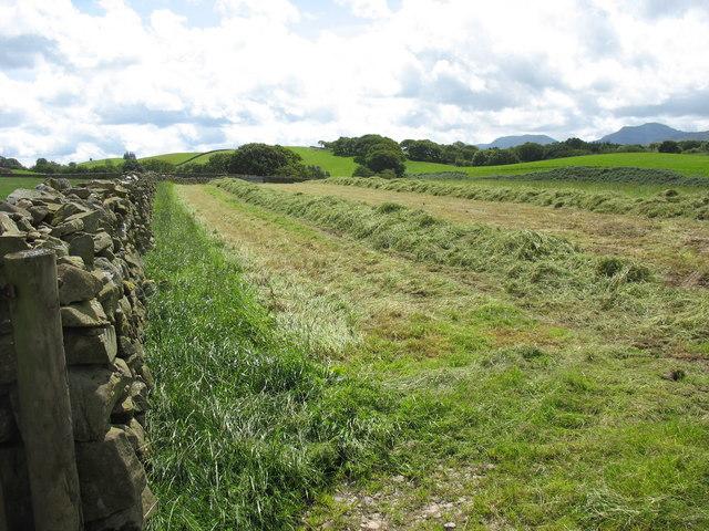 Partially cut hay field