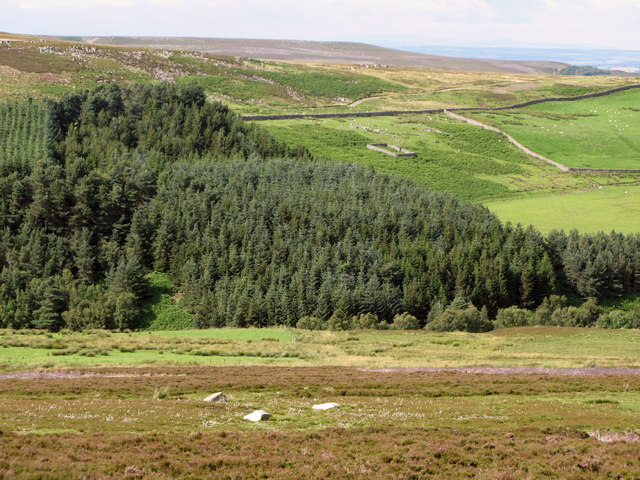Moorland, plantation and pastures near Heatheryburn Farm