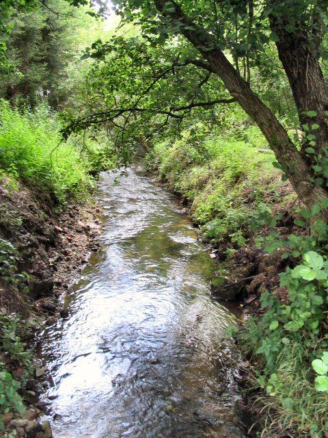 Loach Brook
