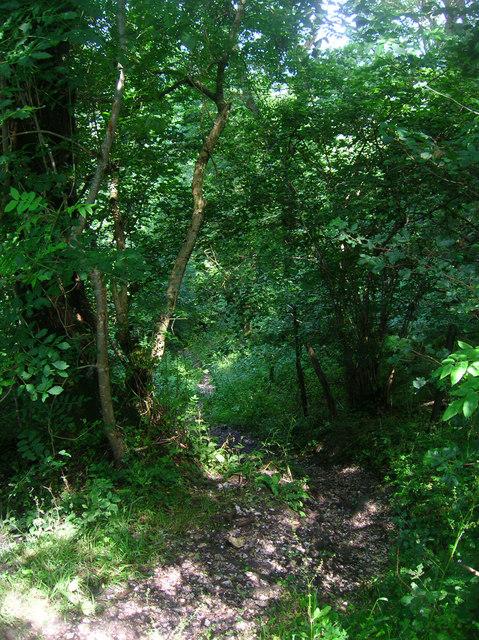 Bridleway, Wroxall Copse