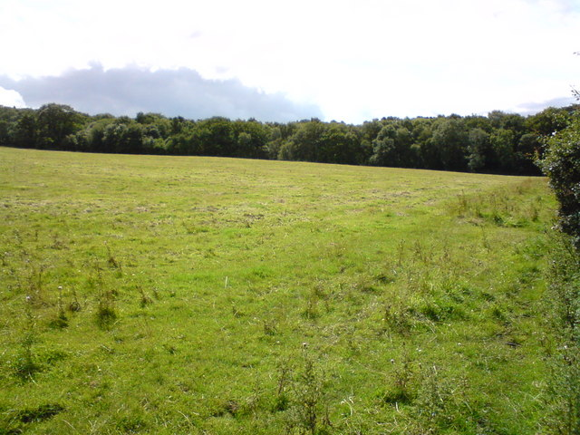 Hyons East Wood