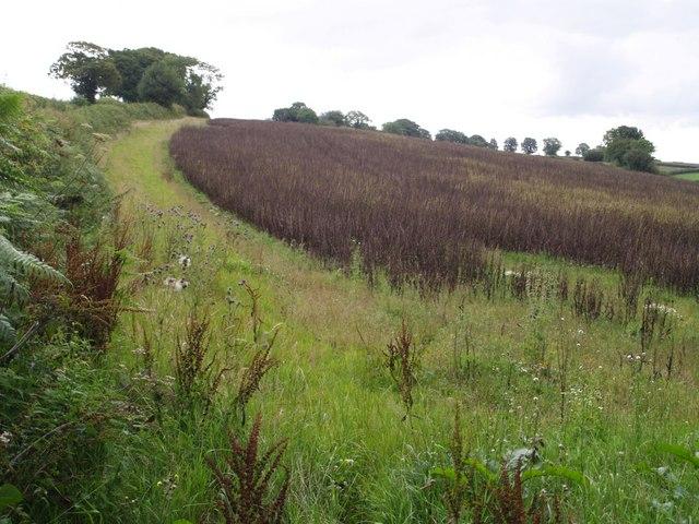Field above Winsham