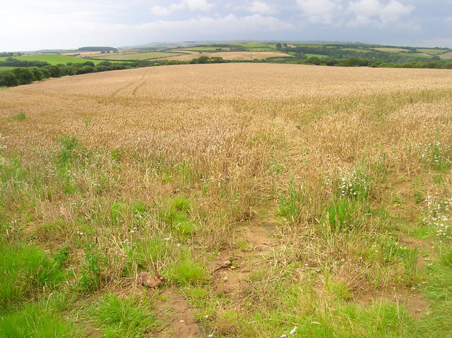 Cornfield near Sheepwash Farm