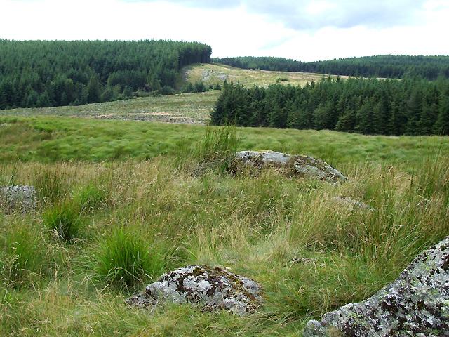 Cwm Berwyn Plantation from Esgair Cerrig, Ceredigion
