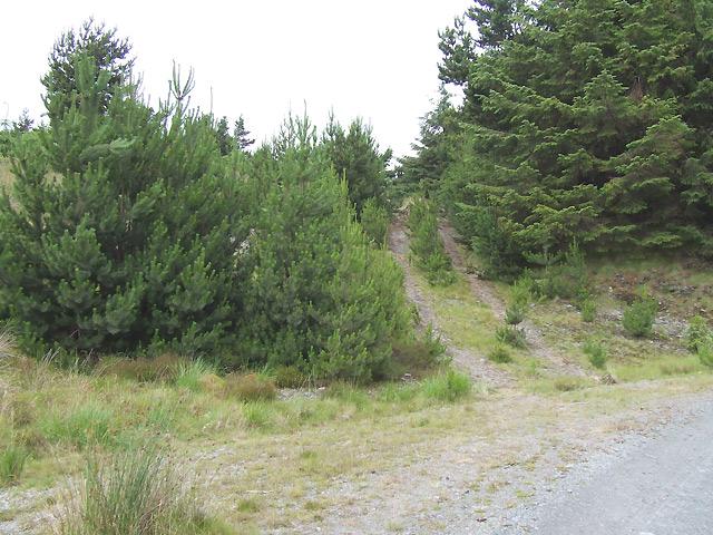Forestry and Tracks, near Llethr Hafodydd, Ceredigion