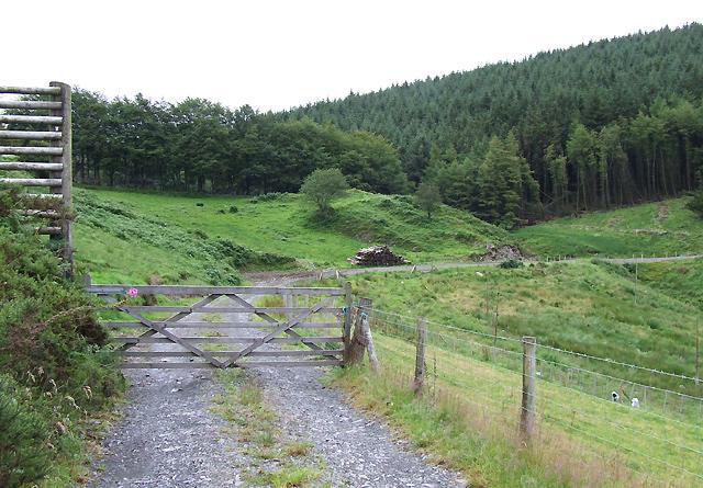 Forestry  Road, Cwm Dulas, Ceredigion