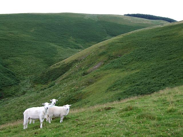 Nant-y-Rhiw  with Sheep, Ceredigion