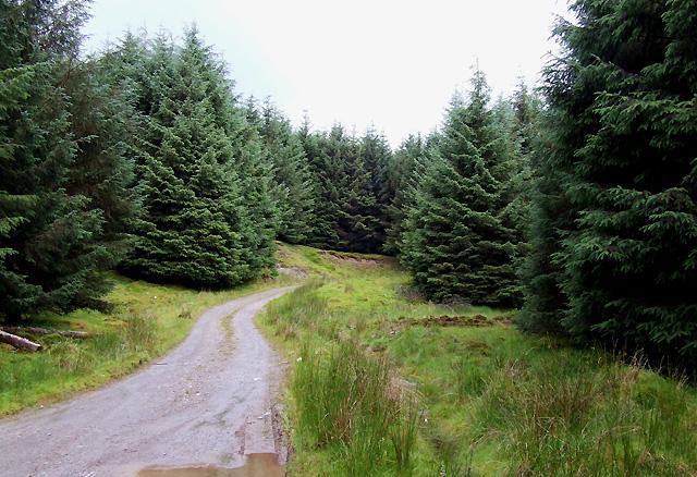 Forest Track near Llethr Erwast, Ceredigion