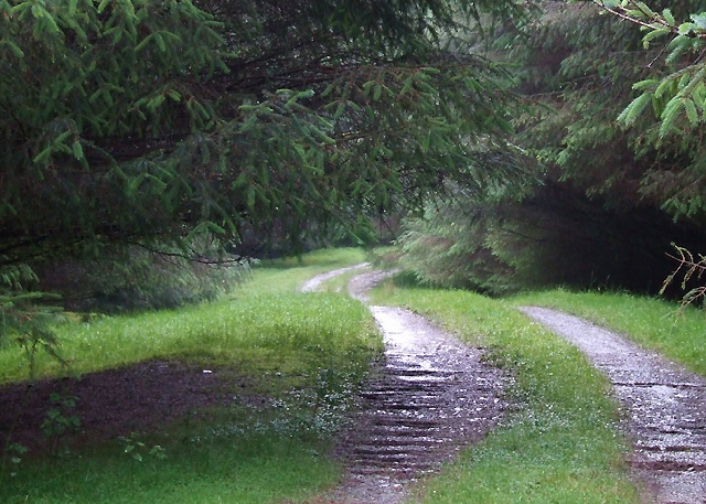 Forestry Road  by Llethr Du, Ceredigion