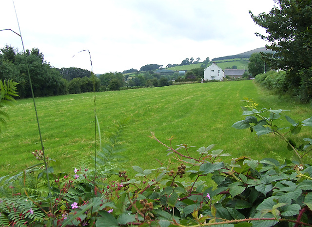 Grazing Land, Llanddewi-Brefi, Ceredigion