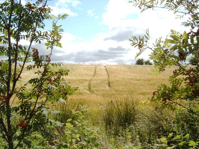 Field in Damhead