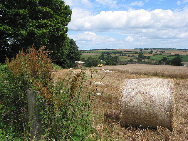 Harvesting the barley