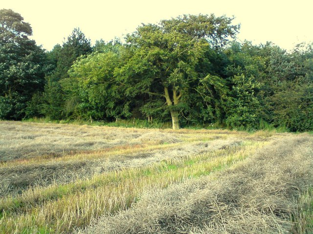 Plantation behind Dalton Hillhead Farm