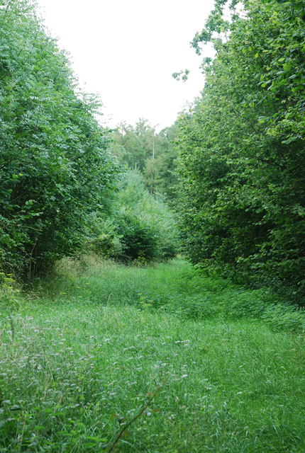 Track leading into Little Gilbert's Copse