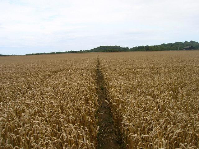 Footpath to Apse Manor Farm