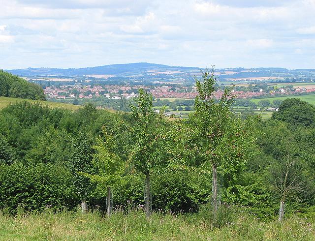 Orchard above Weston-under-Penyard