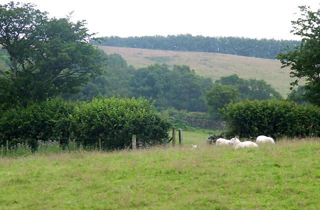 Grazing Land near Gorwydd Farm, Ceredigion
