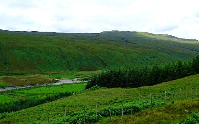 Crannach Plantation above the Strathmore River