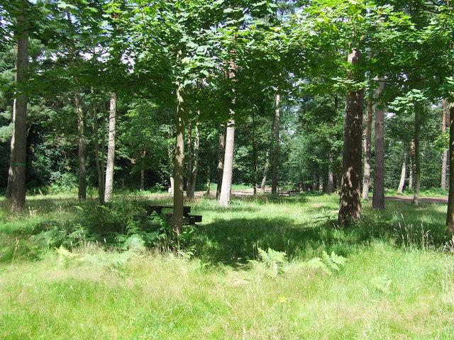 Lynford Arboretum Picnic Area