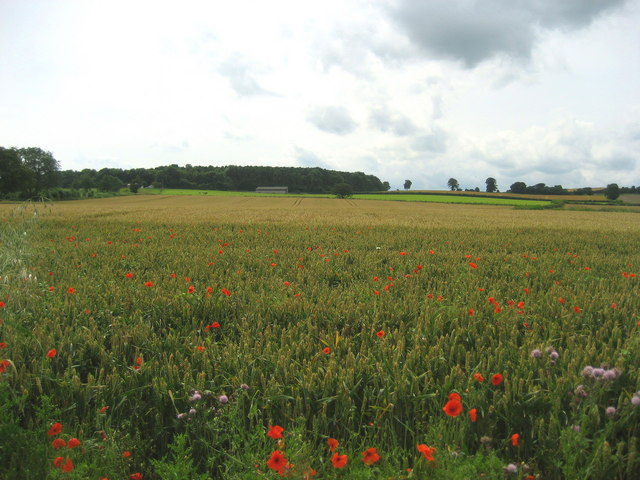 Field off Galphay Lane