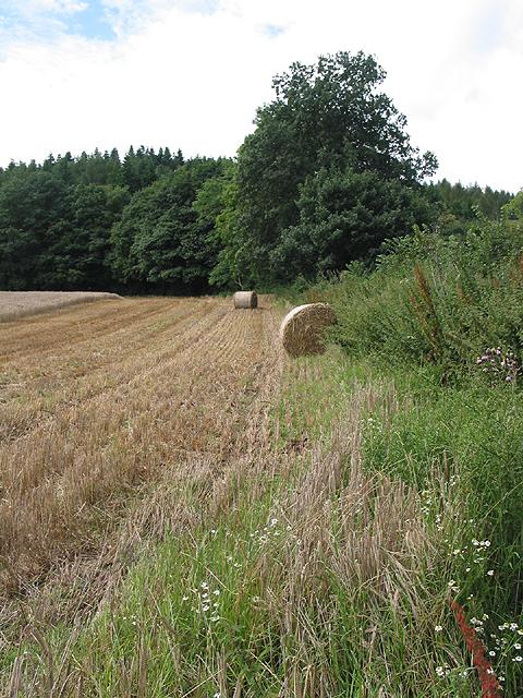 Barley field above Weston-under-Penyard
