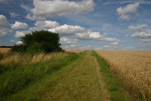 Field margin near Withersfield