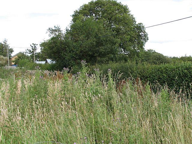 Kinnerton Common