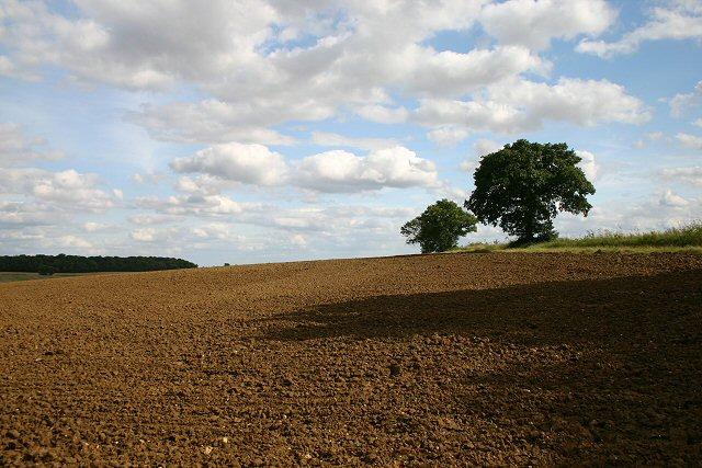 Farmland near Cadge's Wood