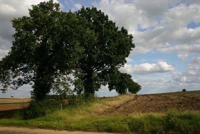 Farmland at Cadge's Wood