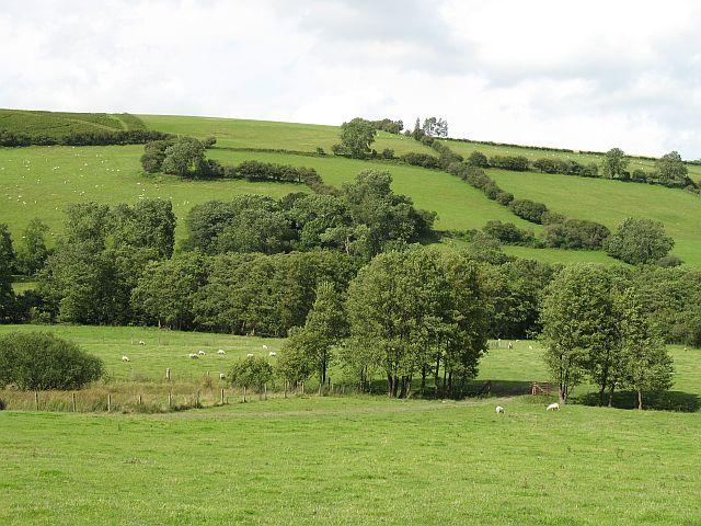Cascob Brook