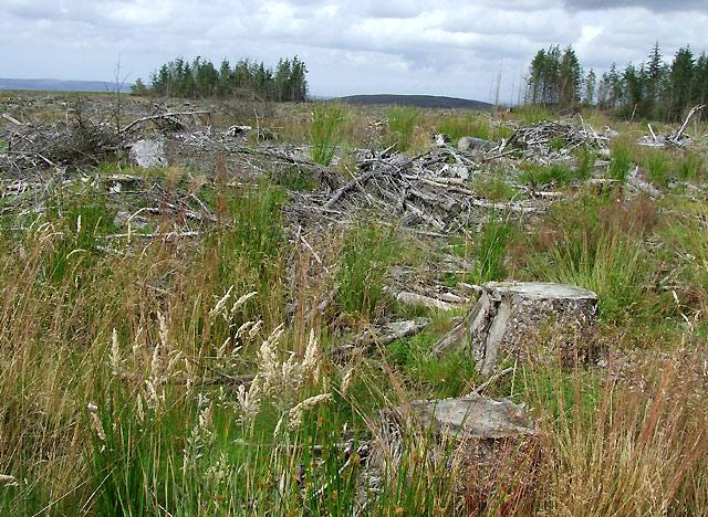 Forest Remains, south-west of Llanddewi-Brefi, Ceredigion